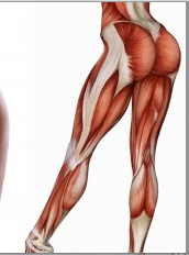 90 muscles of female cellulite zones